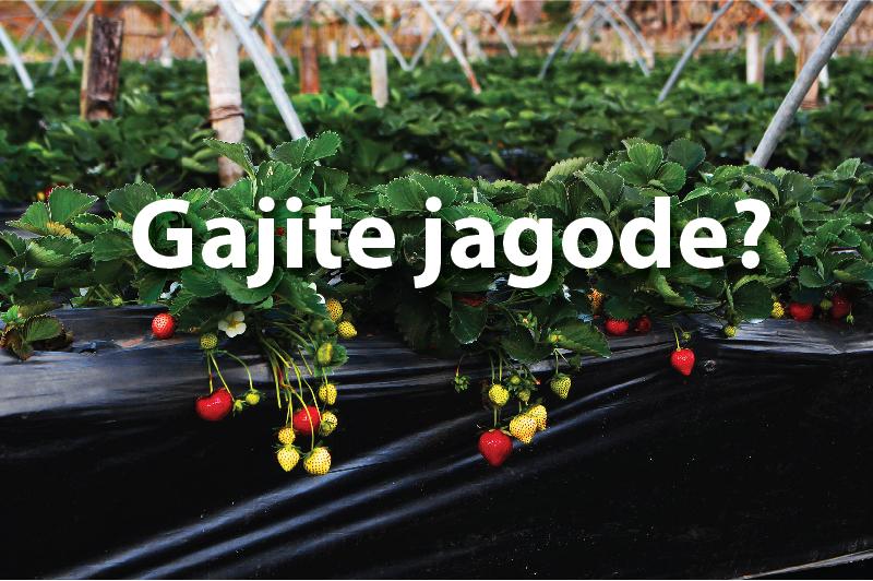 Stručni saveti za gajenje jagoda